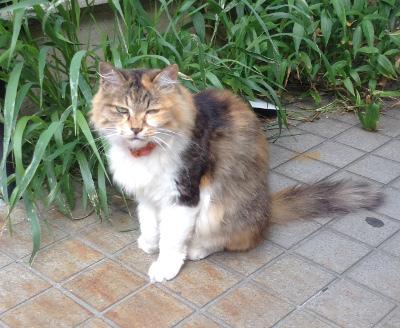 お江戸の朝猫