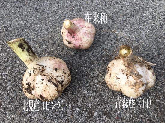 にんにく3種~2017②