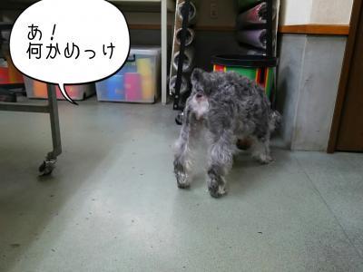 moblog_36bd04bc.jpg