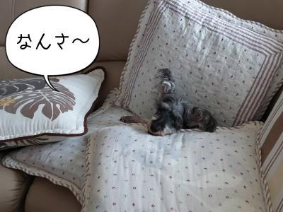 moblog_af026bc3.jpg