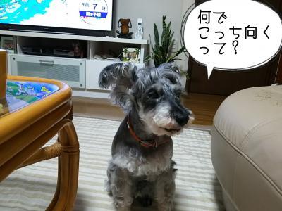 moblog_e1a09486.jpg