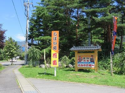 hanagiku10.jpg