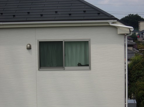 通りすがりに見かけた猫(768)