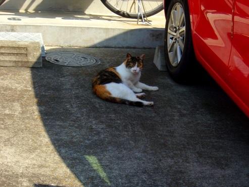 通りすがりに見かけた猫(769)b