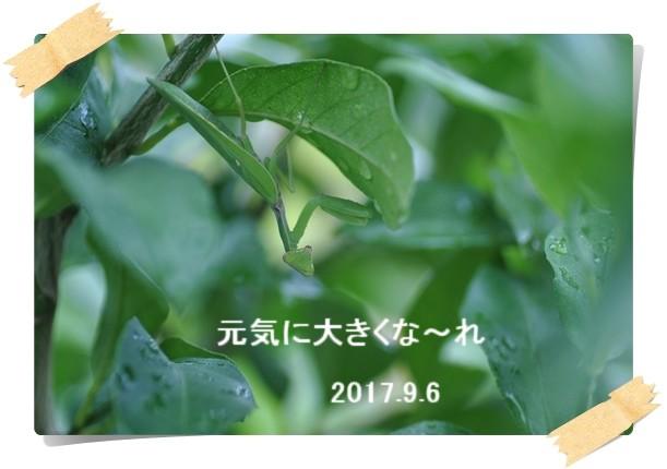2017_09_06_02.jpg