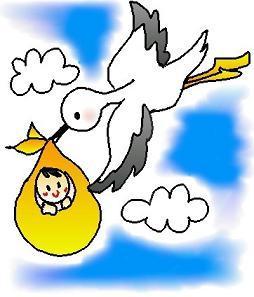 stork_4.jpg