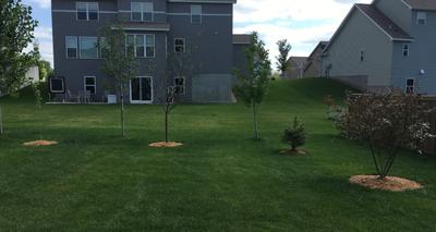 backyard07141707.jpg
