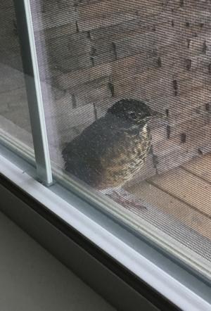 birds1703.jpg