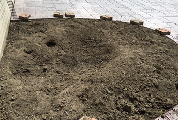 garden1702.jpg