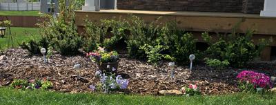 garden1707.jpg