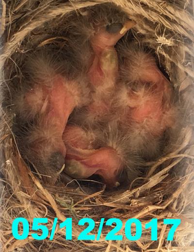 nest051217.jpg