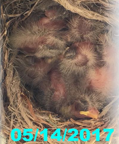 nest051417.jpg