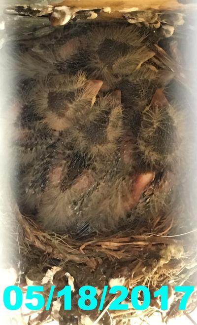 nest051817.jpg