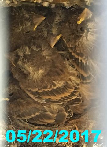 nest052217.jpg