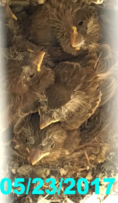 nest052317.jpg