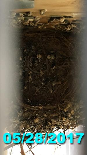 nest05282017.jpg