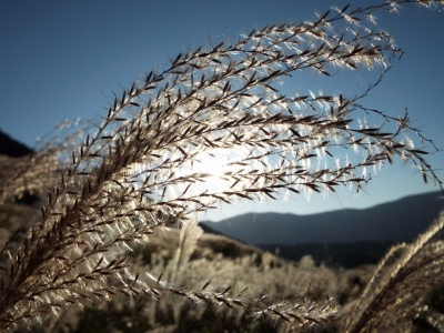 仙石原 すすき草原 1