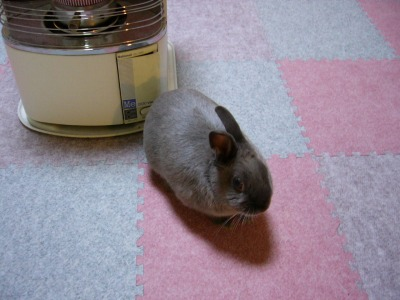 ウサギのストーブ