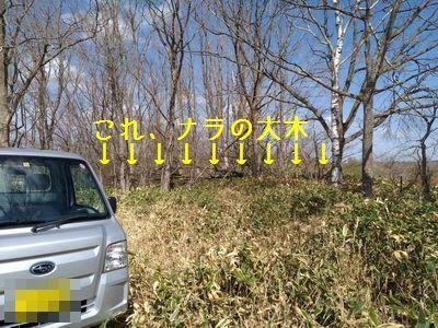 P_20170509_134052_vHDR_Auto.jpg