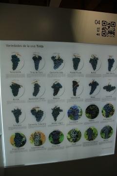 01245 Museo del Vino en Castillo