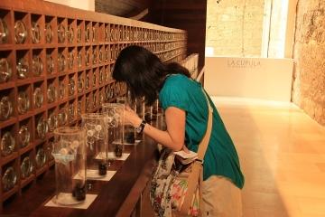 01249 Museo del Vino en Castillo