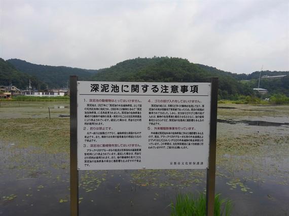 2017_07_15-16_京都_119_2017_07_20