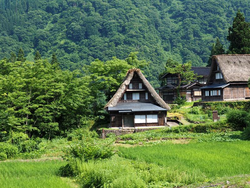 gakayamaD01 (1)