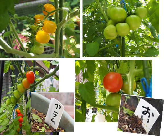 7月2日のトマト