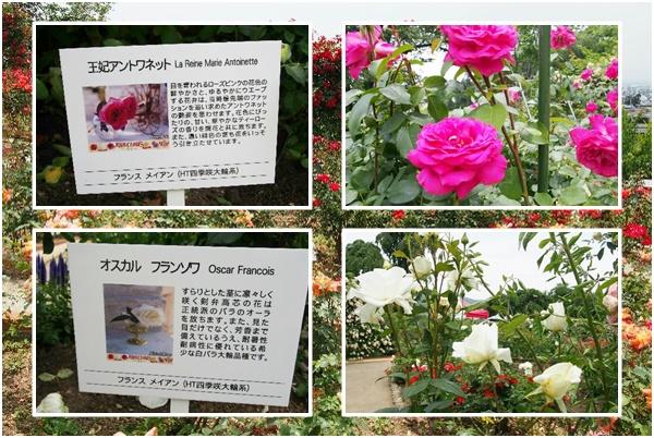 双松バラ園2