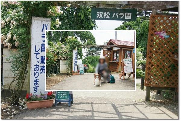 双松バラ園4