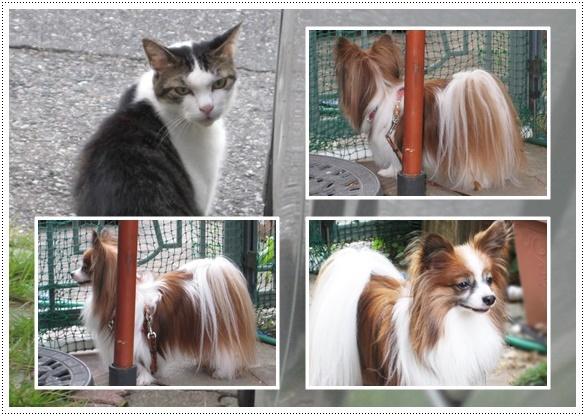 近所の猫さん-2