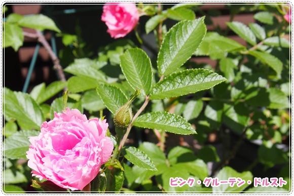 P5110827-2.jpg