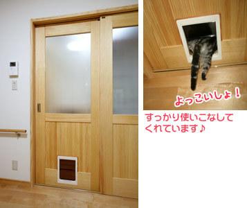 story03_cat04.jpg