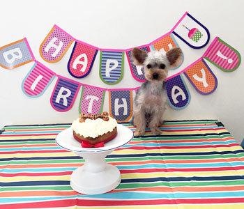 クッキーくん誕生日
