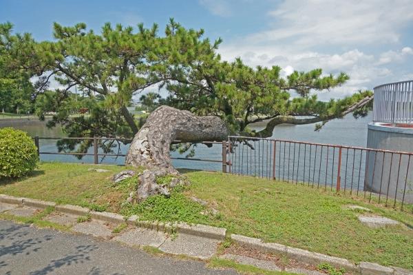 aDSC08049常盤公園の松
