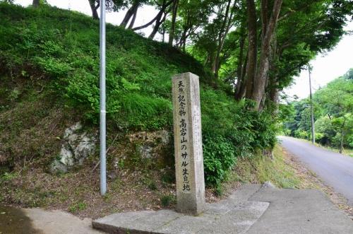 ta.高宕山二ホンサル 001