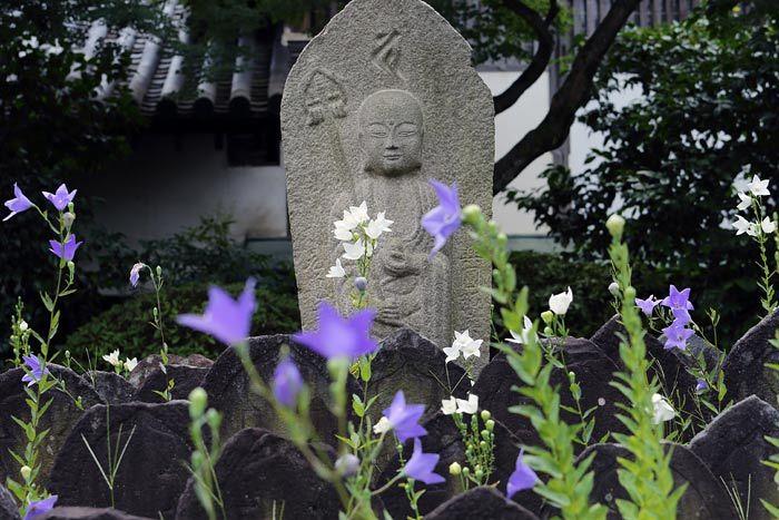 元興寺 キキョウ1