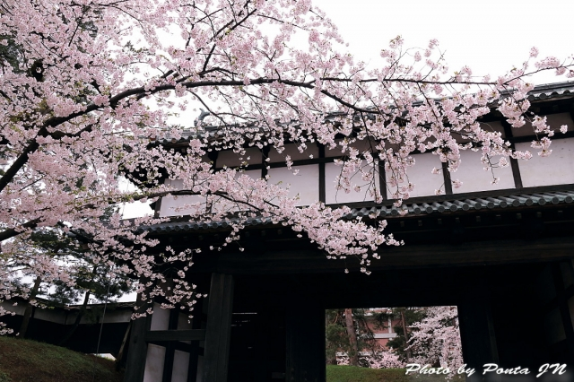 hirosaki1704A-0005 (2)