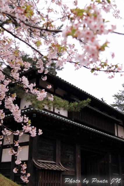 hirosaki1704A-0014.jpg