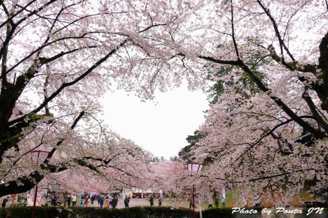hirosaki1704A-0016.jpg