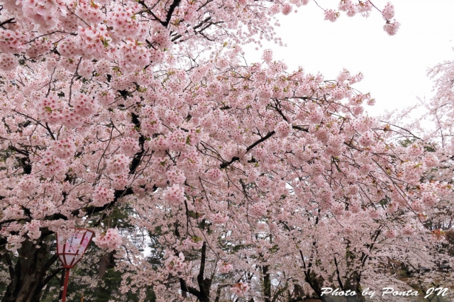 hirosaki1704A-0019.jpg