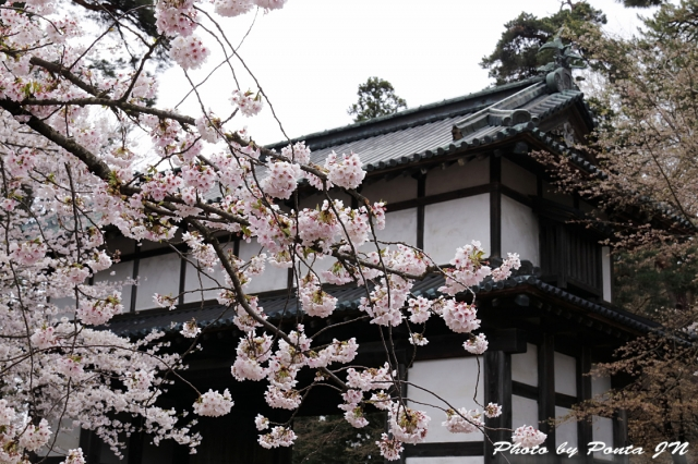hirosaki1704A-0036.jpg