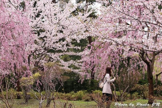 hirosaki1704A-0041.jpg