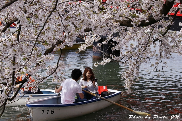 hirosaki1704A-0095.jpg