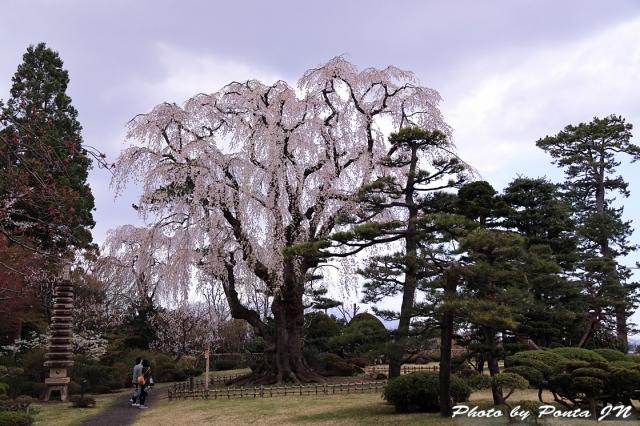 hirosaki1704A-0117.jpg