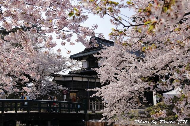 hirosaki1704B-0002.jpg