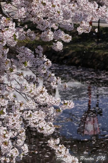 hirosaki1704B-0006.jpg