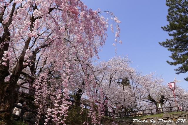 hirosaki1704B-0011.jpg