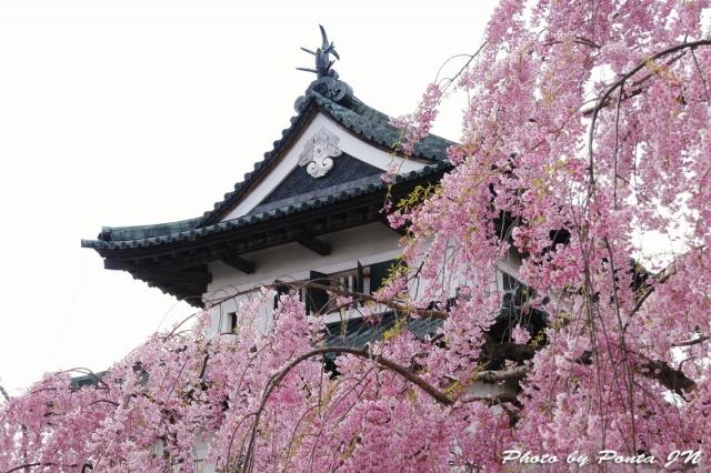 hirosaki1704B-0016.jpg