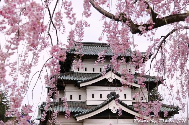 hirosaki1704B-0019.jpg